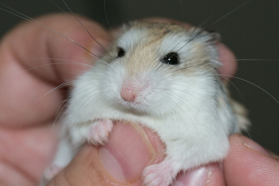 The pet sagas- Part un- The rodentchronicles