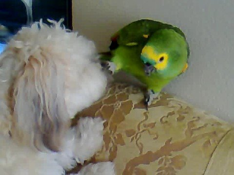 Dog and Parrot